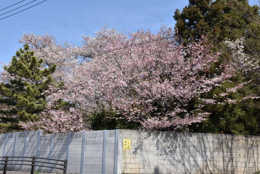 170416omoigawa_1_3