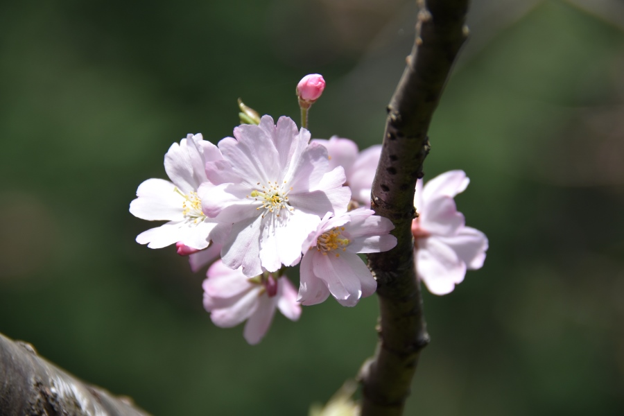 180329omoigawa